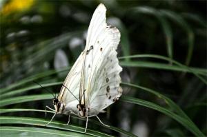 DSC_2139 white butterflies reduced