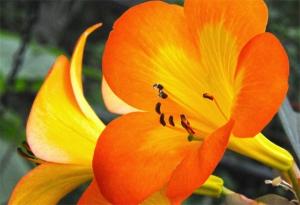 DSC_2148 orange flowers reduced