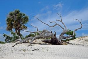 Dune Ghost