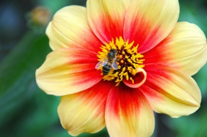 Parisian Bee