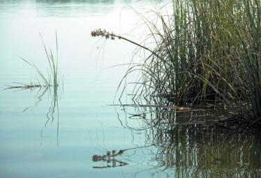 Stilll Waters